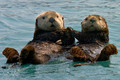 otters - hollyoaks photo