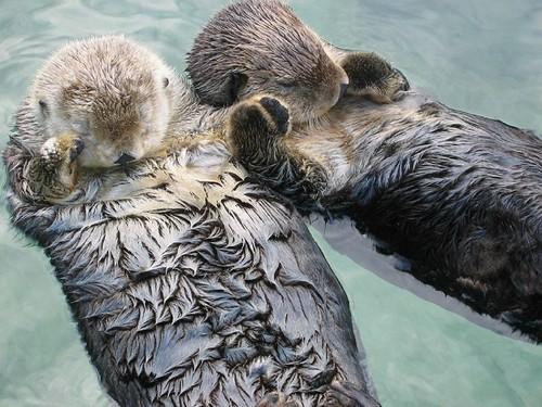 ottters