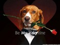 valentine dog - dogs photo