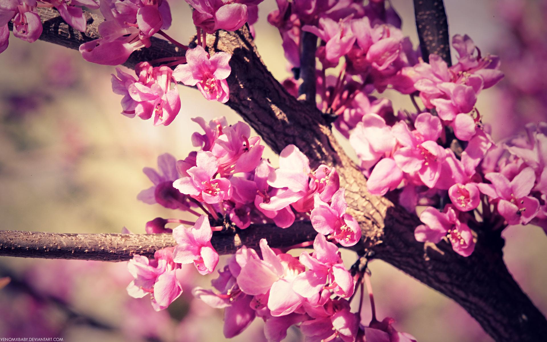Flowers wallflower