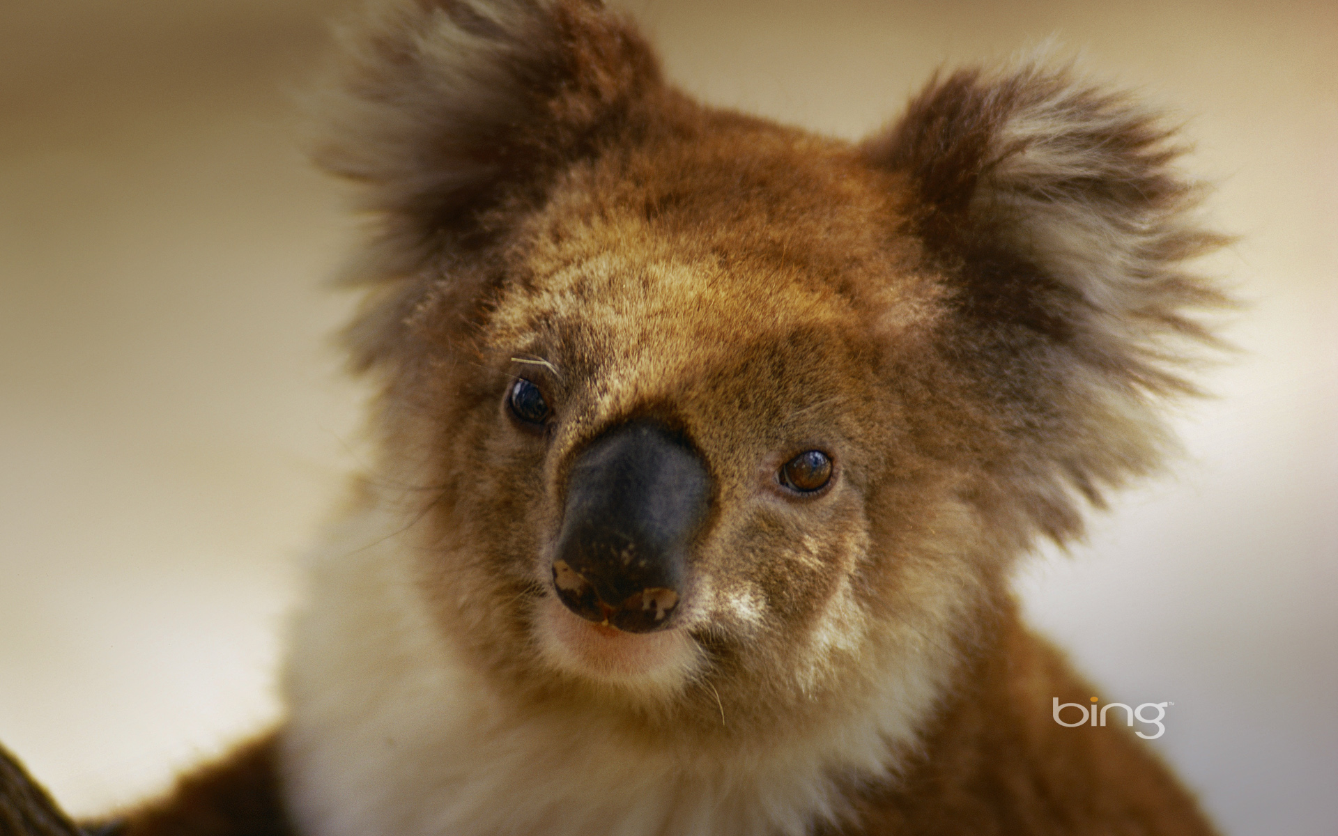Australian Landmarks & Animals Best Of Bing Australia