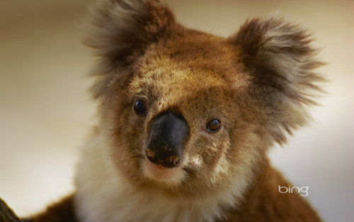 Best Of Bing Australia