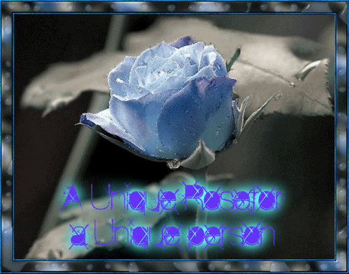 Colorful hoa hồng