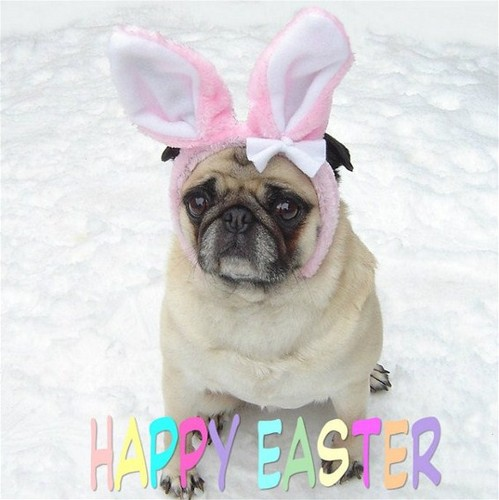 Cute Pug Easter Bunny Rabbit