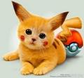 Cute?