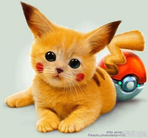Pokémon achtergrond possibly containing a kitten titled Cute?
