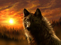 Dark Wolf - wolves photo