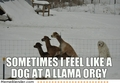 Dog at a llama orgy - sex-and-sexuality photo
