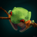 Frog  - animals photo