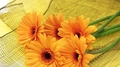 Gerberas  - flowers photo