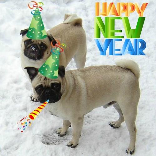New jaar Pugs