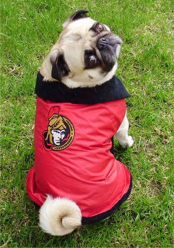 Ottawa Senators Pug Hockey người hâm mộ