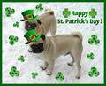 St. Patrick Day Pug Dog