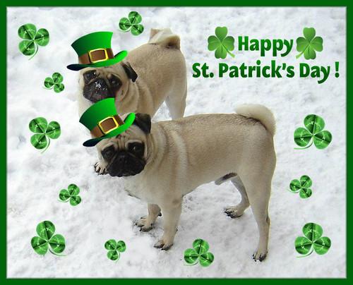 St. Patrick 日 Pugs