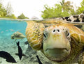Turtle  - animals photo