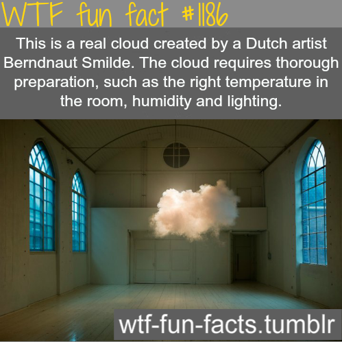 Random wallpaper entitled WTF fun fact