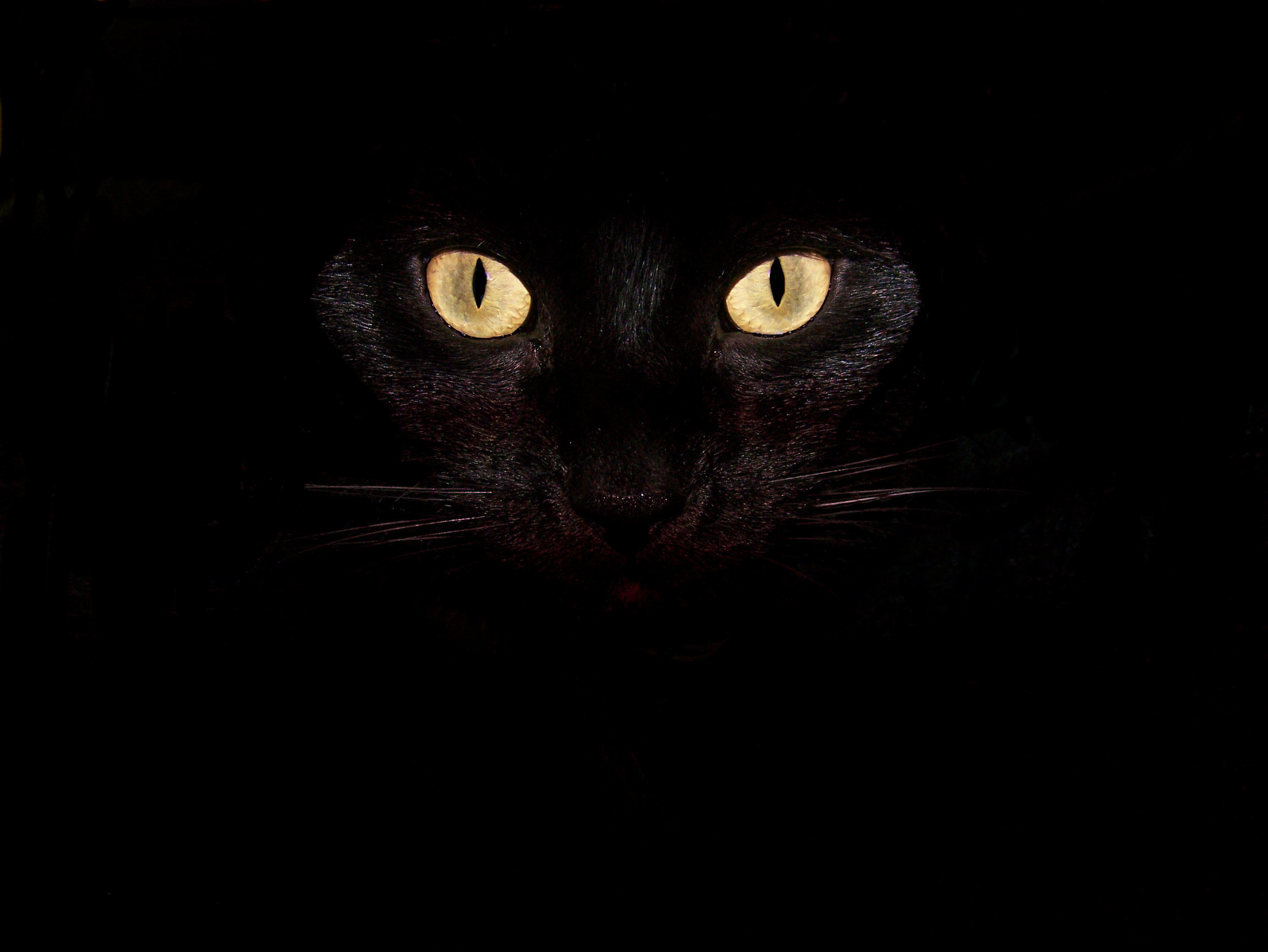 Paganism Images Black Cat HD Wallpaper And Background Photos