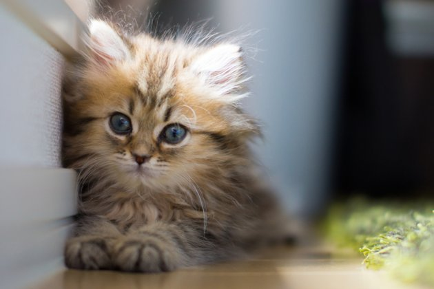 Cats images World's Cutest Kitten wallpaper and background ...