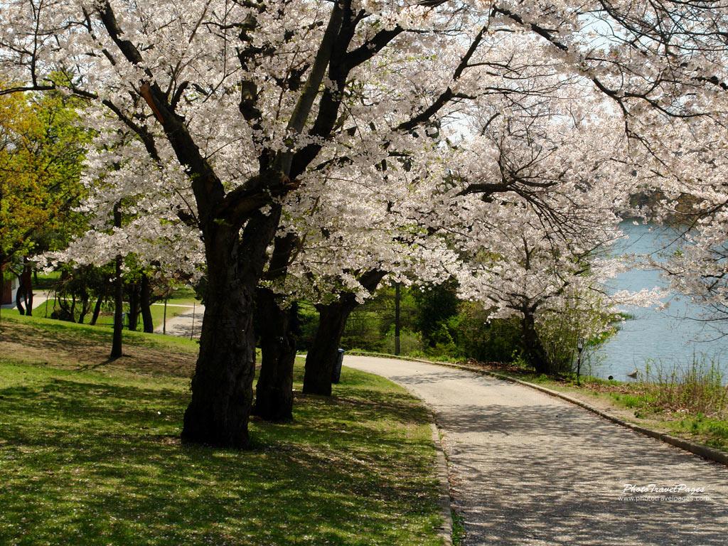 beautiful spring trees wallpaper -#main