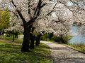 beautiful blooming trees  - spring wallpaper