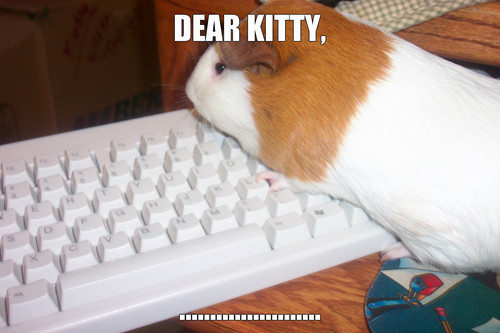 Guinea Pigs wallpaper possibly with a computer keyboard titled deaqr kfdiafgj9o
