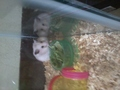 hammsty - hamsters photo
