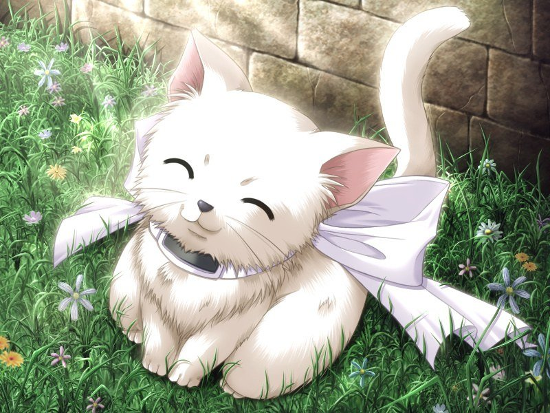Msyugioh123 Images Anime Neko Girl HD Wallpaper And Background Photos
