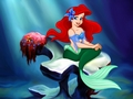 Ariel - disney-princess wallpaper
