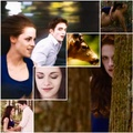 Bella's first hunt mash up - twilight-series photo