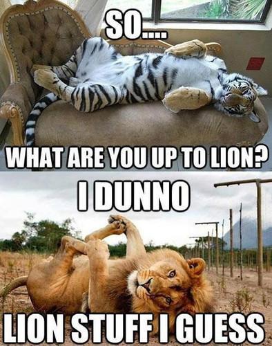 Cat humor