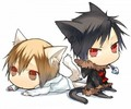 Chibi Heiwajima Shizuo and Orihara Izaya in Cat Form - chibi fan art