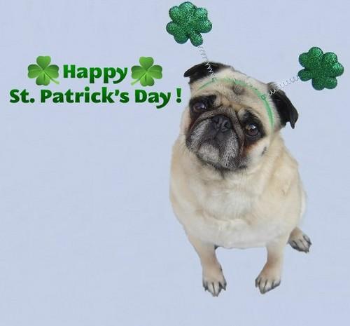 Cute Pug Happy St. Patrick's Day!