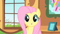 Fluttershy - fluttershy photo