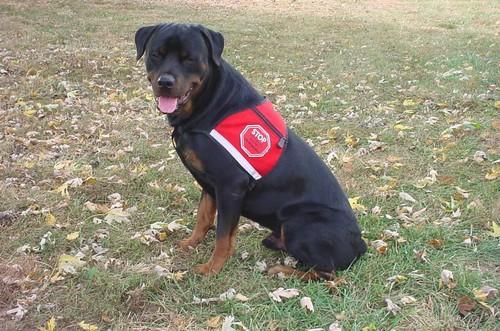 Logan's service dog Butch