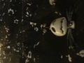Nightmare before Christmas bag - nightmare-before-christmas photo