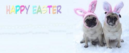 Pug Easter フェイスブック Cover 写真