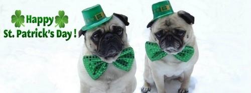Pug St. Patrick's giorno Facebook Cover foto