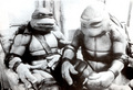 Tender turtles - ninja-turtles photo