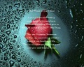 The Rose in My Heart by Me - poetry photo