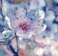 beautiful spring flower - spring photo