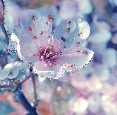 Spring images beautiful spring flower wallpaper and background spring images beautiful spring flower wallpaper and background photos mightylinksfo