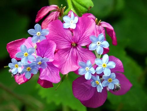 beautiful spring bloom
