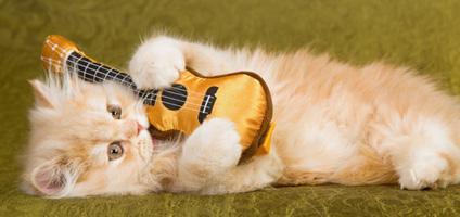 cat guitar, gitaa