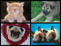 kittens and puppies - animal-humor fan art