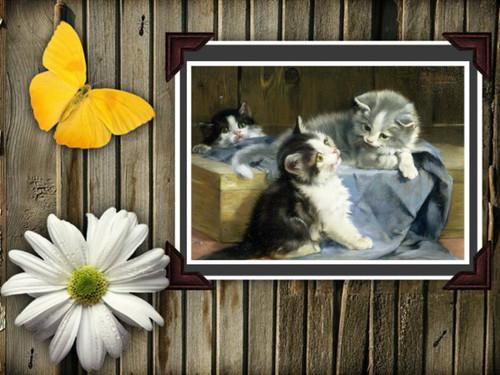 kitties in a tub