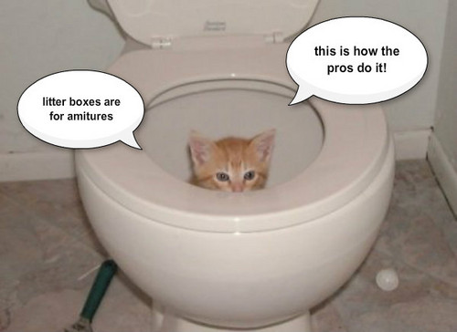 Animal Humor wallpaper possibly with a toilet bowl and a toilet called sitten in the toolet