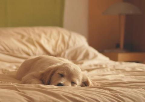 cachorritos fondo de pantalla called sleepy<3