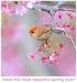 spring <3 - spring icon