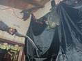 vampire bat - halloween photo
