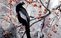 Bird  - animals wallpaper